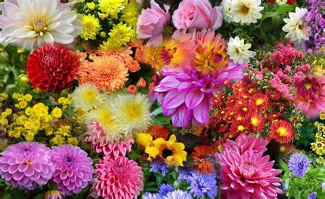 flowers bloom flowers that bloom in autumn