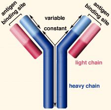 difference between kappa and lambda light chains sclerosis research oligoclonal bands had