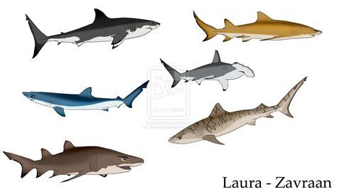 colored sharks by zavraan on deviantart