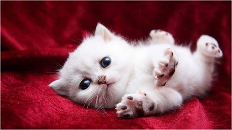 Cute Baby Kittens Just Born   www.pixshark.com   Images