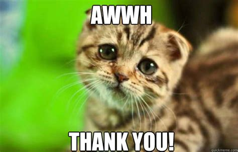 Thank You Cat Meme - awwh thank you thank you cat