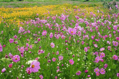 imagenes de flores silvestres chilenas flores silvestres bernardo zorrilla taylor artelista com