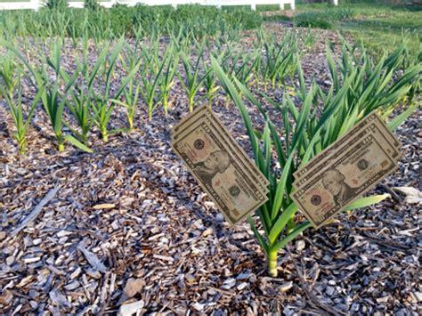 backyard cash crops turn your backyard garden into dollars father s earth gear