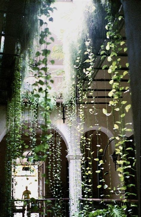cascading indoor plants 25 best ideas about indoor hanging plants on pinterest
