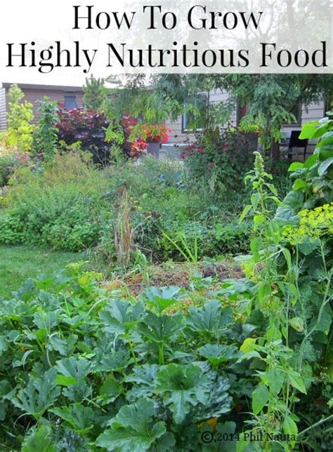 How To Grow Food That S Highly Nutritious And Has Fewer How To Grow Vegetables In Your Garden
