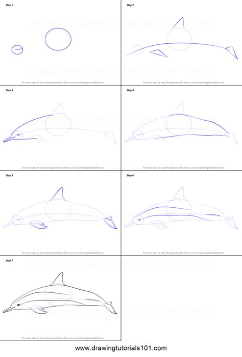 free how to draw how to draw a spinner dolphin printable step by step