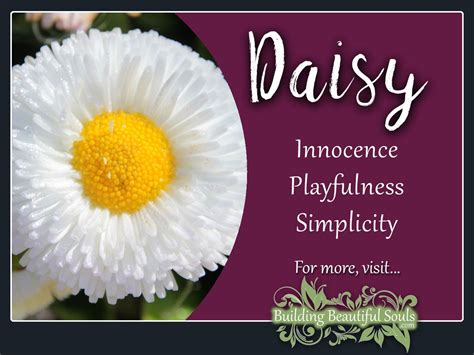 symbolizes meaning daisy meaning symbolism flower meanings symboiism