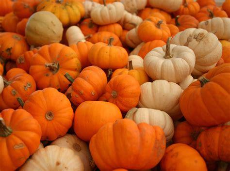 scatter girls pumpkins link up