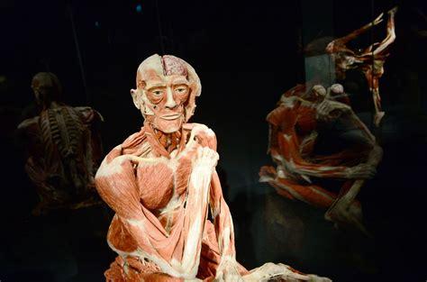 human bodies entradas berlino ecco il museo dell uomo con veri cadaveri