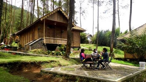 rumah kayu  antara pohon pinus  jadi alternatif