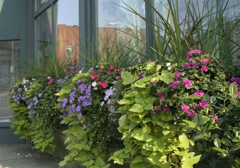 Container Garden Ideas For Sun Ideas Home Inspirations Garden Container Ideas