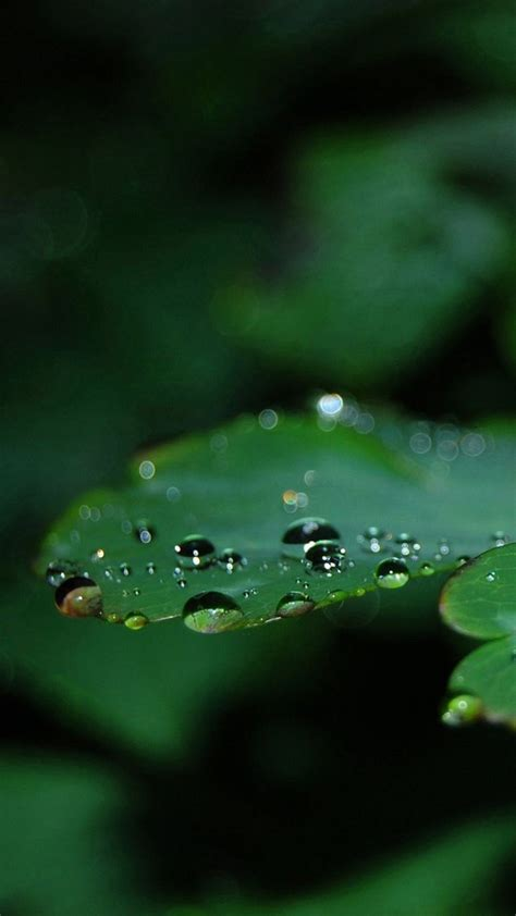 themes iphone 6 plus download wallpaper iphone 6 plus waterdrops leaf 5 5 inches