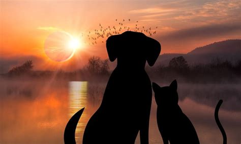 dogs and solar eclipse how will your pets react to the solar eclipse the dogington post