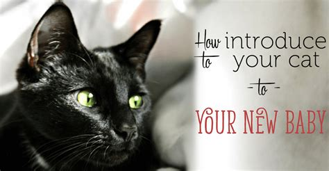 how to introduce a to a cat how to introduce your cat to your new baby