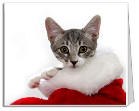 printable christmas cards cats 6 best images of free printable christmas cards you can