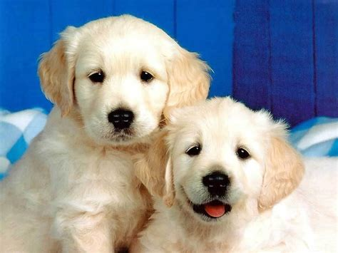 puppies puppies mix masala free puppies picturest