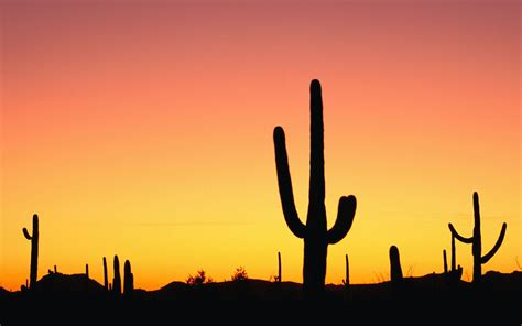 cactus background cactus wallpapers wallpaper cave