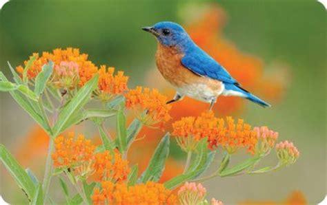 Backyard Bird Count Spring Wild Birds Unlimited Wild Birds Unlimited