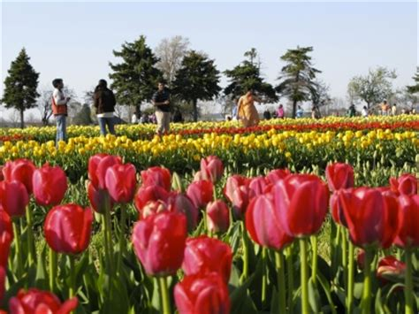Veldheer Tulip Gardens by Attractions Activities And Things To Do Near Lake