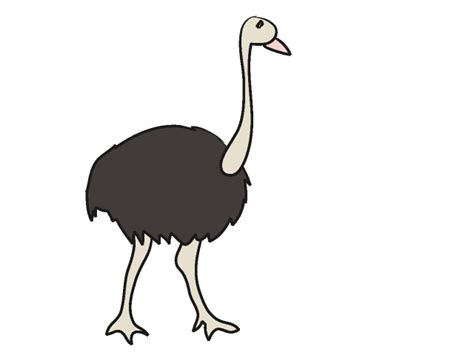 ostrich clipart image gallery ostrich clip