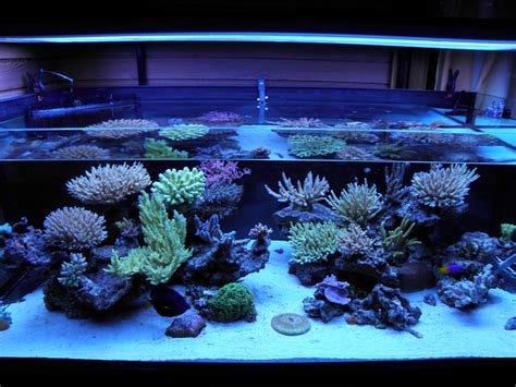 aquascaping reef tank zeovit dream tank of the quarter has unique aquascaping