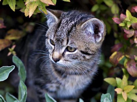 chat et plantes plantes b 233 n 233 fiques et toxiques pour le chat
