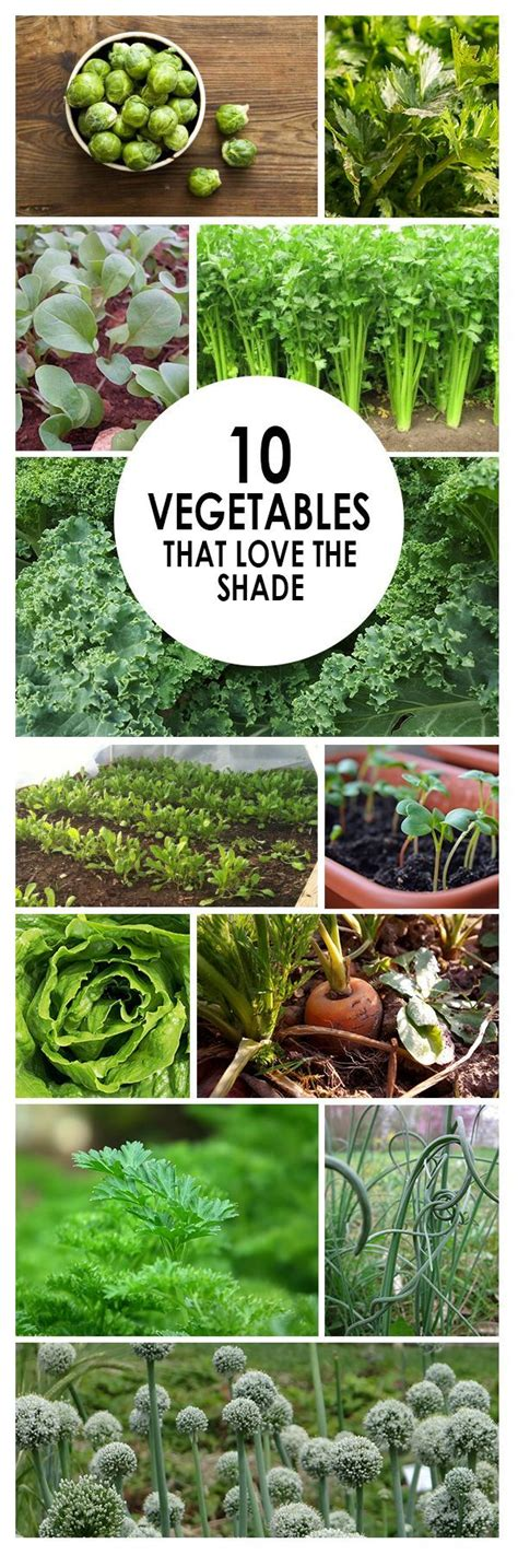 what garden vegetables like shade 25 best ideas about garden projects on diy garden projects rock garden and