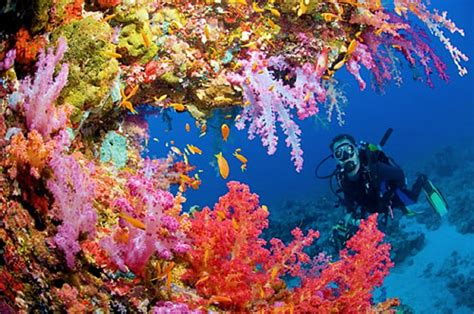 what color is coral reef our coral reefs are starving