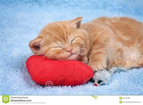 foto sul cuscino piccolo gatto dorme sul cuscino fotografia stock
