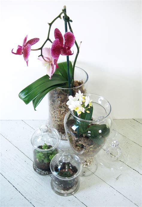 Vase With Feathers Orchid Terrariums How Did You Make This Luxe Diy