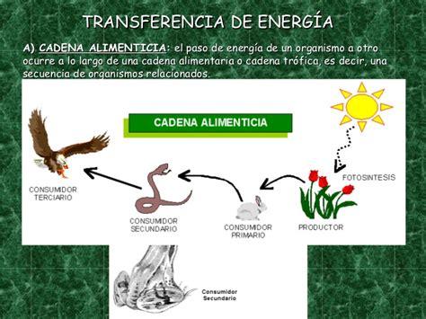 cadenas troficas en ecosistemas ecosistema y cadenas tr 243 ficas