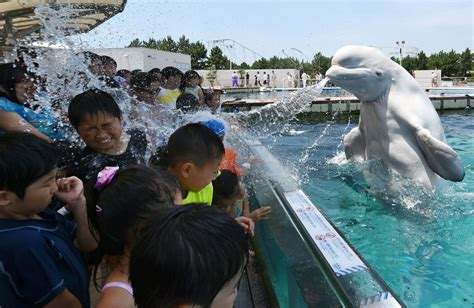 beluga whale  absolutely jacked  spewing water