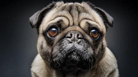 imagenes otoñales con animales perros buenos bienvenidos la pegatina de la pol 233 mica