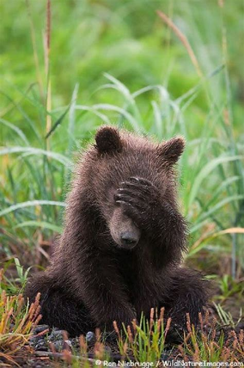 Bears Smile 30 pictures guaranteed to make you smile pics