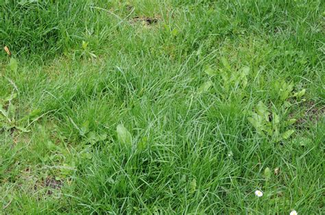 preparation for a new lawn to prevent weeds and encourage
