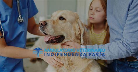 veterinario pavia ambulatorio veterinario indipendenza a pavia pv