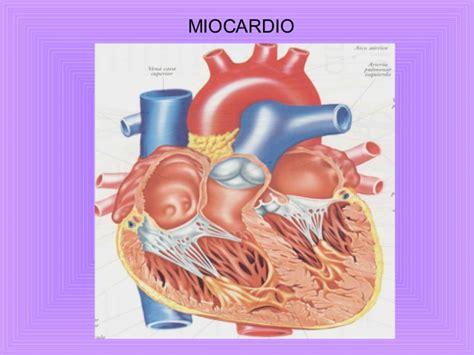 infarto del miocardio image gallery miocardio