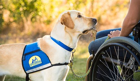 what do service dogs do cci org a service is more than a vest