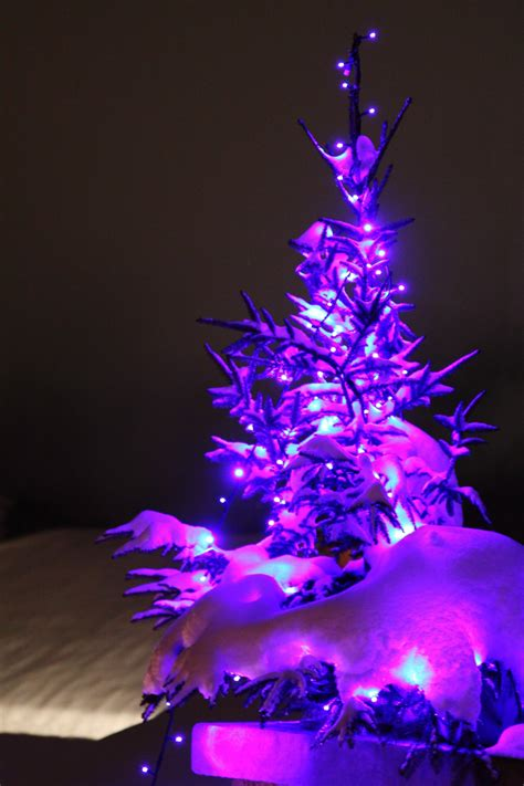 christmas tree night light free images snow winter light night purple petal