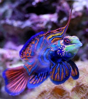 baby shark mandarin 49 best images about fish on pinterest colorful fish