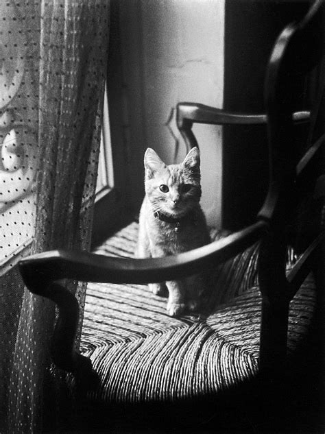 Writer S Chair willy ronis 1910 2009 french the great cat