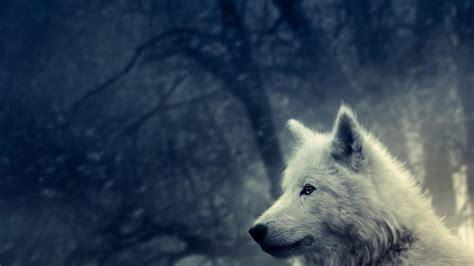 fondos de pantalla de lobos en movimiento fondos de pantalla lobo blanco 1920x1080 fondos de pantalla y wallpapers