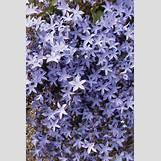 Blue Yarrow Flower | 1024 x 1536 jpeg 310kB