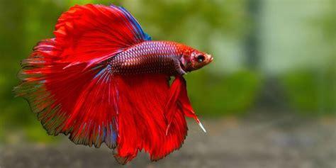 fiori acquatici nomi image gallery pesci