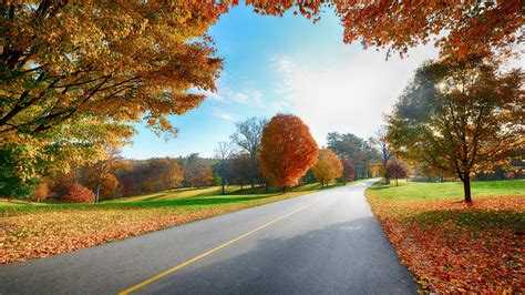 autumn tree road landscape mystery wallpaper