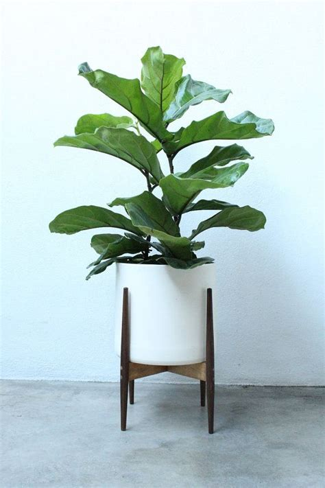 modern plants indoor 25 best ideas about modern plant stand on pinterest indoor plant stands modern live plants