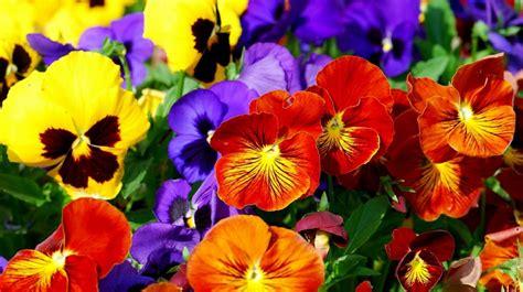 wallpaper bunga bunga gambar bunga indah dan cantik kumpulan gambar