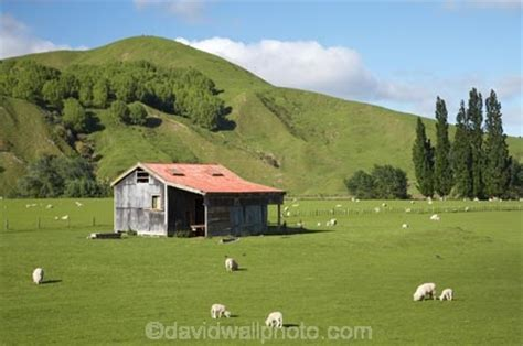 Farm Sheds Nz by Farm Building Sheep And Farmland Near Te Karaka