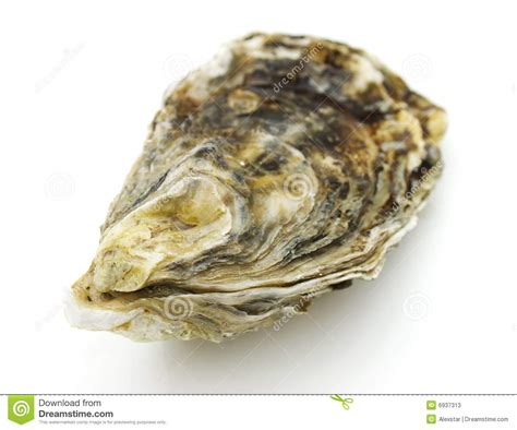 Oyster Shell L by Oyster Stock Photos Image 6937313