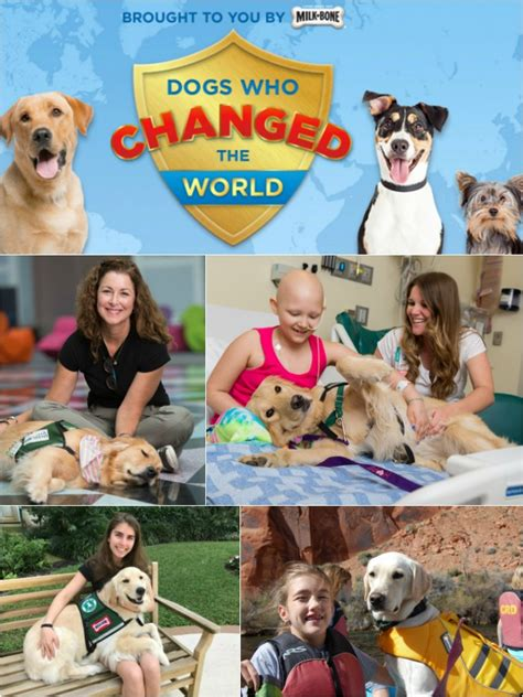 why do golden retrievers seizures 2017 milk bone 15 dogs who changed the world golden woofs